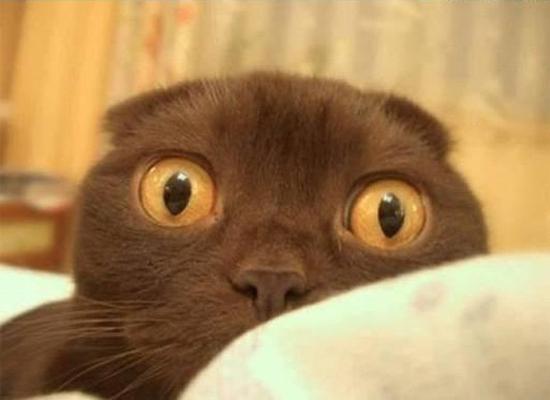 gatto panico