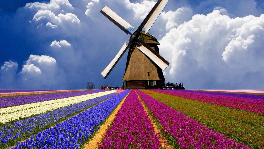 Mercato editoriale olandese
