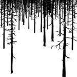 LA TERRA CHE SCOMPARE di Julia Phillips, traduzione di Fabio Zucchella, Marsilio